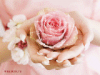 Фотография цветочек