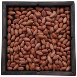 thumb_pre_1491345165__bold-peanuts-500x5