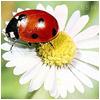 Полтавский областной перина... - последнее сообщение от HAPPY15
