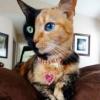 Фотография Рыжая кошка